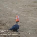 Crow Drinking Beer By Kshitij Gupta